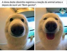 QUE AMOR!❤❤❤ #cachorro #amoanimais #bulldog #luludapomerania #maltes #labrador #goldenretriever #viralata #pug #schnauzer #spitzalemao #petmeupet