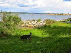 Foto - Google Foto Akita, Den, Mountains, Google, Nature, Travel, Animals, Naturaleza, Viajes