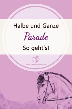 Whole parade, half parade – zero problem! This is what the right help looks like. So sehen die richtigen Hilfen aus. - Art Of Equitation Trail Riding Horses, Horse Riding Quotes, Horse Riding Tips, Horseback Riding Outfits, Riding Lessons, All About Horses, Cute Horses, Horse Training, Clothes Horse