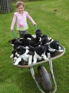 "Summer Hopper with the 14 baby dogs from her female dog ""Star"". UK.  ...Just look at the smile on the little girl's face :OD ...love it"