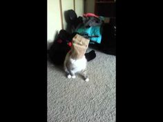 cat and a paper bag. Cat, apparently, finds playing with a paper bag quite intruiging