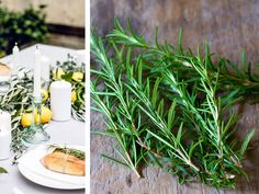 Rosemary is one of the most commonly used spices out there. But what do you know about the health benefits and side effects of rosemary? Rosemary is nati. Alzheimers, Natural Mosquito Repellent Plants, Home Remedies, Natural Remedies, Herbal Remedies, Headache Remedies, Ginger Ice Cream, Anti Inflammatory Herbs, Infused Oils