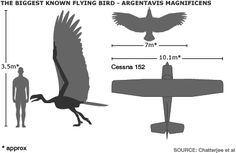 Learn more about how birds fly!