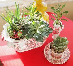 Indoor Cactus Garden Ideas | ... make a indoor container garden using succulents, you'll be hooked