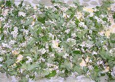 A MAGYAROK TUDÁSA: Gyógynövények alkalmazása, Gyűjtése - Fizikai és lelki gyógyulás Plants, Planters, Plant, Planting