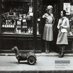 robert doisneau  - le chien à roulettes - 1977