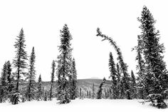 White Mountains #6 - White Mountains 2017, BLM Artist-in-Residence Project http://www.christofteuscher.com/wm