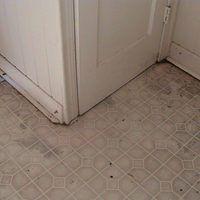 repairing water-damaged laminate flooring. in 2019 | good ...