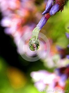 A close-up view of water droplet on a flower with a reflection of flowers.