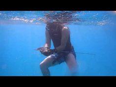 Harpoon & Fish ( Lithognatus mormyrus ) MIRMIR AVI