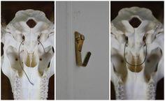 DIY hanging deer skull and bleaching them