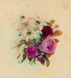 roses and lillies anaglyph