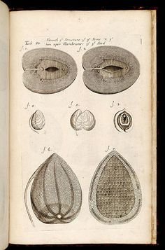 The anatomy of plants - Biodiversity Heritage Library