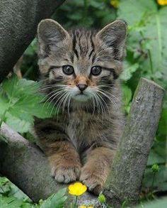 """🐱Cuteness alert!  Doesn't this little face make you go """"awwww"""" 🐱  #ilovecats #kittens #cat #cutenessalert #cute #kitten #kitty #kitties #catlove #pets #animals #bekind #animalsarepeopletoo #herekittykitty"""
