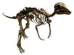 Absolutte dating dinosaurer