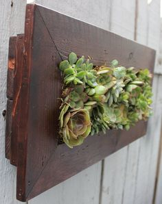 Indoor/Outdoor Living Wall with planted living succulents. Great hanging planter for garden, living room, or office! Check them out at https://www.etsy.com/shop/onewithplants