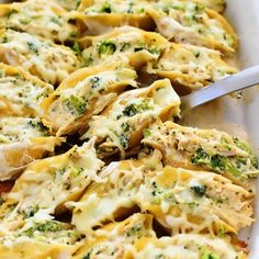 Chicken broccoli alfredo stuffed shells recipe food blogs im always looking for new dinner ideas of course having a food blog i need new recipes to post but way before i had my blog i loved searching for new forumfinder Gallery