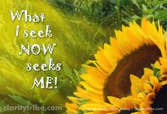 """""""What I seek now seeks me!"""" claritytribe.com and www.facebook.com/claritytribe Seek Me, All Quotes, Photo Backgrounds, Open Up, Self Improvement, Law Of Attraction, Life Is Good, Spirituality, Inspirational Quotes"""