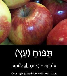 How to say Apple in Hebrew. Includes Hebrew vowels, transliteration (written with English letters) and audio pronunciation by an Israeli. Love The Lord, God Is Good, Hebrew Vowels, French Phrases, Learn Hebrew, Hebrew Words, Word Study, Judaism, Learn French