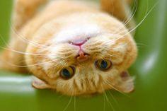 Kitten #kitten