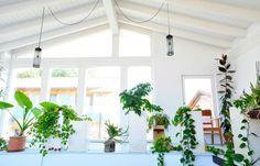Nos encantan las plantas y la luz natural en nuestros proyectos.
