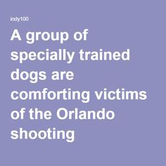 06-15-2016   A group of specially trained dogs are comforting victims of the Orlando shooting