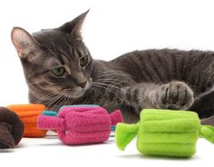 Leftover fleece wrapped around empty thread spools or if you are not crafty can be purchased Diy Cat Toys, Homemade Cat Toys, Dog Toys, Kitten Toys, Catnip Toys, Animal Projects, Cat Crafts, Here Kitty Kitty, Cat Furniture