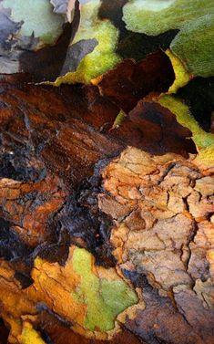 tree #bark #texture by Barbara Beacham