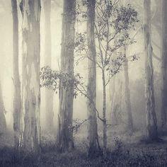 Dark+forest+3