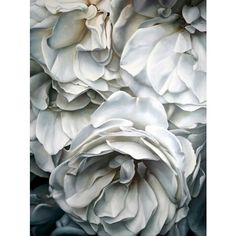♥ grey matter ♥ ❤ liked on Polyvore featuring backgrounds, flowers, photos, pictures and images