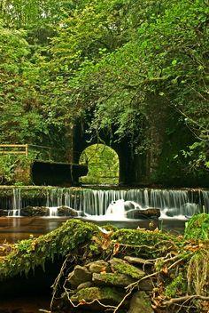 Glenshelane woodland walk  County Waterford  Ireland