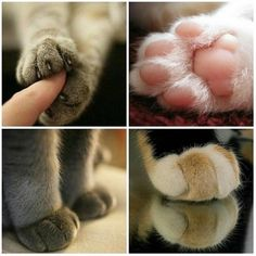 Piddlypaw fluffstuffs &toe beans make my heart happy