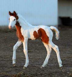 Precious baby! Look @ those legs!