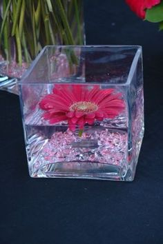 Weddingchannel galleries floating gerber daisy centerpiece beth williamson this would be pretty with a white gerbera daisy junglespirit Gallery