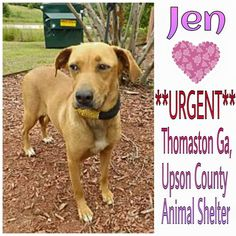ADOPTED  Please Share ♥ Thomaston Ga.~ Meet Jenn, DUMPED by owner, in need of a adopter or rescue.  http://www.adoptapet.com/pet/12943940-thomaston-georgia-hound-unknown-type-mix  You do not have to live in Ga. Transports can often be arranged!  Please note~ If you are interested or have questions about this baby!!   Adrian Releford Phone: (706) 647-5586 areleford@upsoncountyga.org  Hope Master, Rescue Coordinator Phone (904) 797-9402 hope@hope4dogs.net