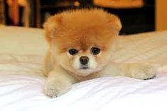 Resultado de imagen para perritos mas lindos y tiernos del mundo