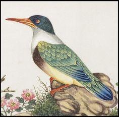 Chinese Bird art