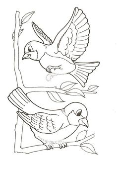 Animals Birds print picture 189