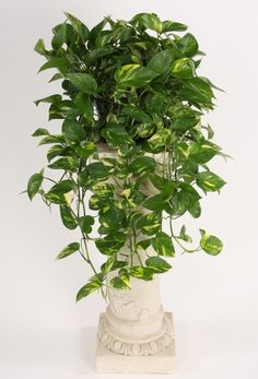 Golden Pothos The Golden Pothos makes the NASA list for its ability to clear formaldehyde from the air. Try adding it to your kitchen or living room as a hanging plant, as the leaves will grow down in cascading vines. They grow easily in cool temperatures will low levels of sunlight.