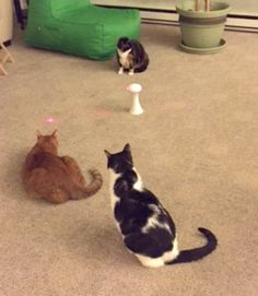 Frolicat Cat Laser Toys #sponsored review and feature on TwoClassyChics blog.