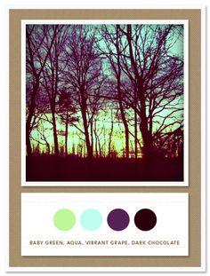 Color Card 012: Baby Green, Aqua, Vibrant Grape, Dark Chocolate