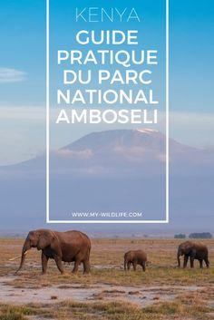 Vous prévoyez de partir en voyage au Kenya ? Lisez mon guide pratique du parc national Amboseli, l'un des lieux incontournables du Kenya. #safari #gamedrive #amboseli #kenya #kilimandjaro #animaux #oiseau #wildlife #birdwatching #elephant