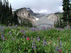 Summerland (Mt. Rainier)