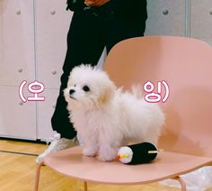 Baby Animals, Cute Animals, Male Models Poses, Nct Chenle, Funny Kpop Memes, Samoyed, Cute Icons, Beautiful Babies, Nct 127