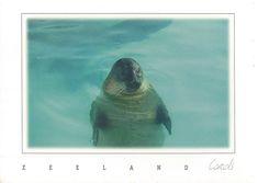 Polar Bear, Postcards, Fish, Pets, Gallery, Animals, Animales, Animaux, Animal Memes