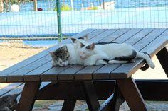 FOTOĞRAF TAHİRE.Ö-/KADIKÖY/İSTANBUL/27/08/2015