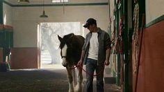 Great picture of the relationship of a man and his horse. To learn how to use pinterest with CLICK ON THE PIN