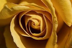 Ivy House, Colour Board, Shades Of Yellow, Mellow Yellow, Colorful Fashion, My Flower, Caramel, Flora, Things To Come