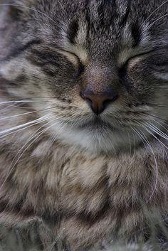 kitty cat face sleeping