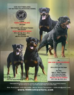 VDR Rottweilers Top Rottweiler Producing Kennel Alex Rodriguez White House, Tennessee VRDrotts@gmail.com    www.VDRrottweilers.com